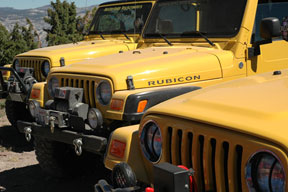 Way too many yellow jeeps